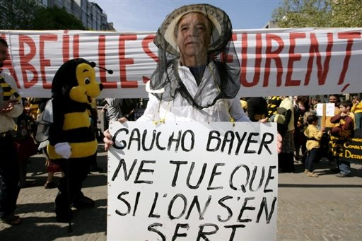 Les champs de colza sont meurtriers pour les abeilles