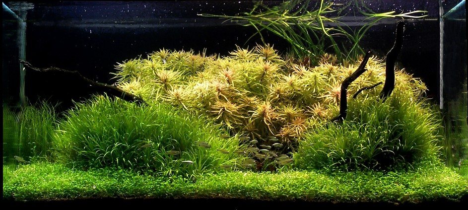Aquascapes by kookaburra AquaScaping World Forum