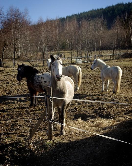 Dans les Vosges.. 080301113017180201778804