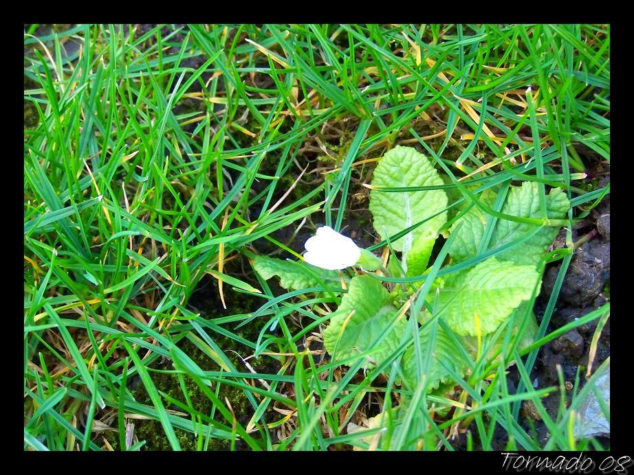 Plantes et fleurs du jardin for Plantes du jardin