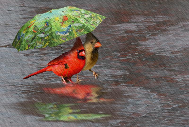 protégeons nous de la pluie 080416100603245171956960