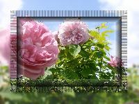 Hebergement gratuit d image et photo