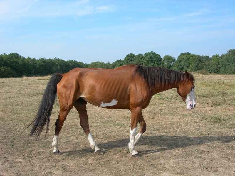 La silhouette du vieux cheval 08060712020638072157177