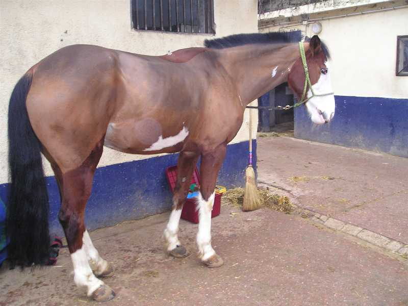 La silhouette du vieux cheval 08060712272738072157280
