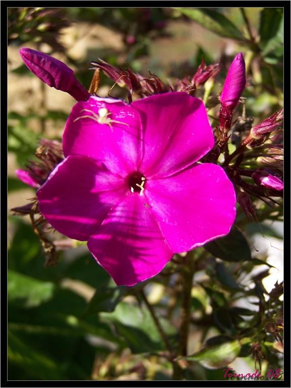 Photos de la nature, été 2008 - Page 4 080812071118101412372873