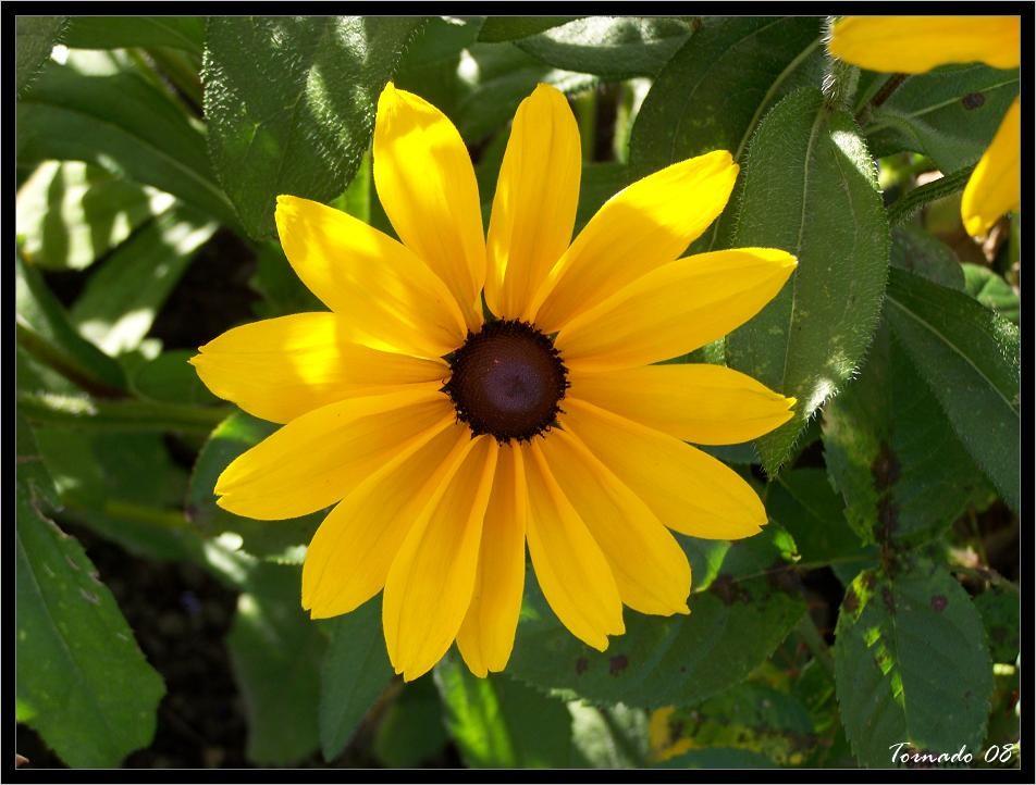 Photos de la nature, été 2008 - Page 4 080812071118101412372874