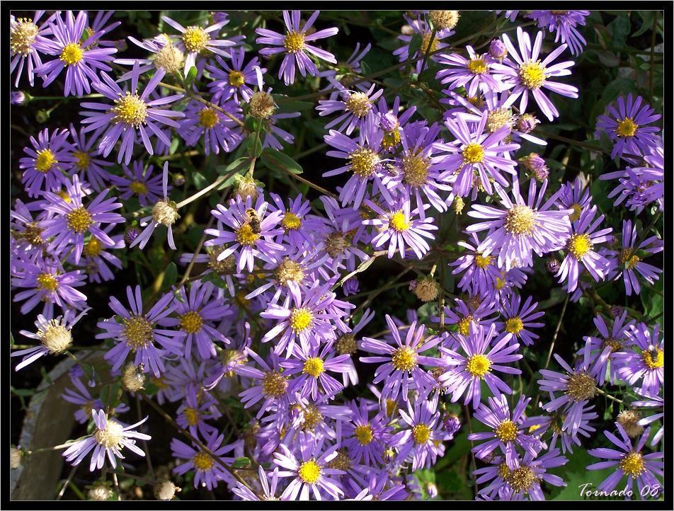 Photos de la nature, été 2008 - Page 4 080812071118101412372875