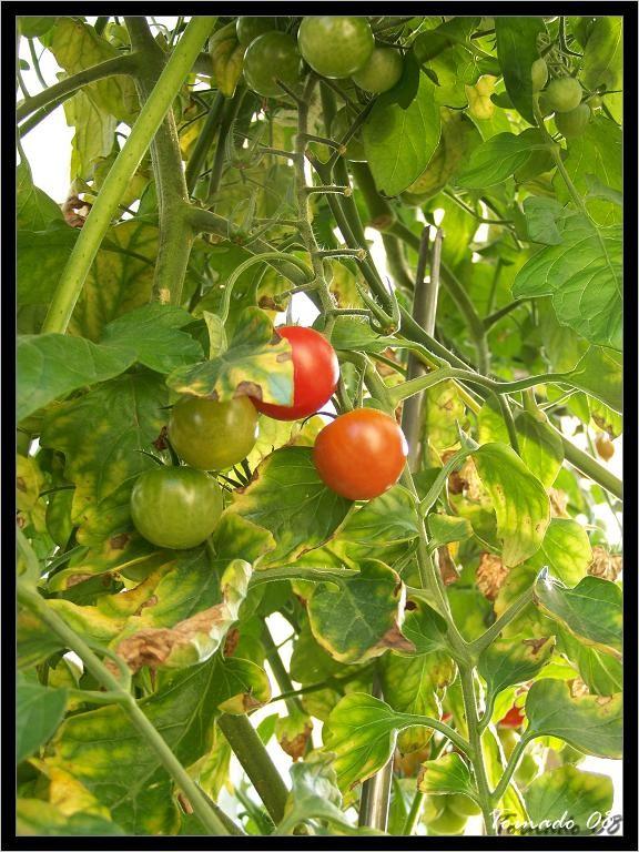 Photos de la nature, été 2008 - Page 4 080812071118101412372876