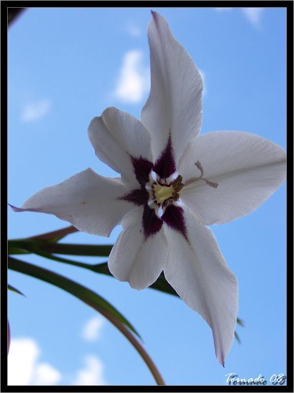 Photos de la nature, été 2008 - Page 4 080812071118101412372879