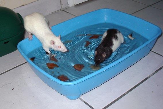 piscine(2)