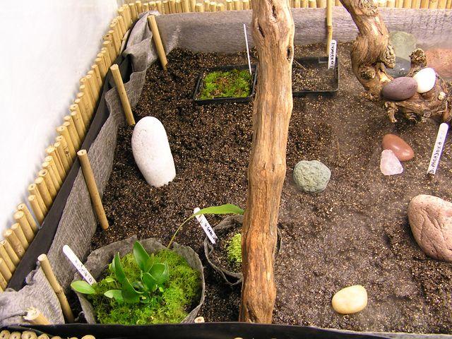 Postez ici vos terrariums serres et tourbieres - Page 2 080921100747411302523247