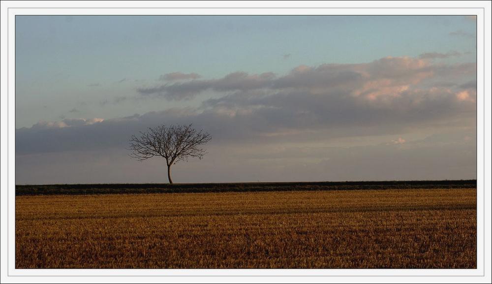 au près de mon arbre .. 080926073808281862541990