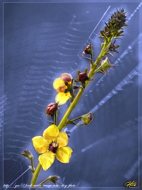 Petite fleur ... 081111050847255582741338
