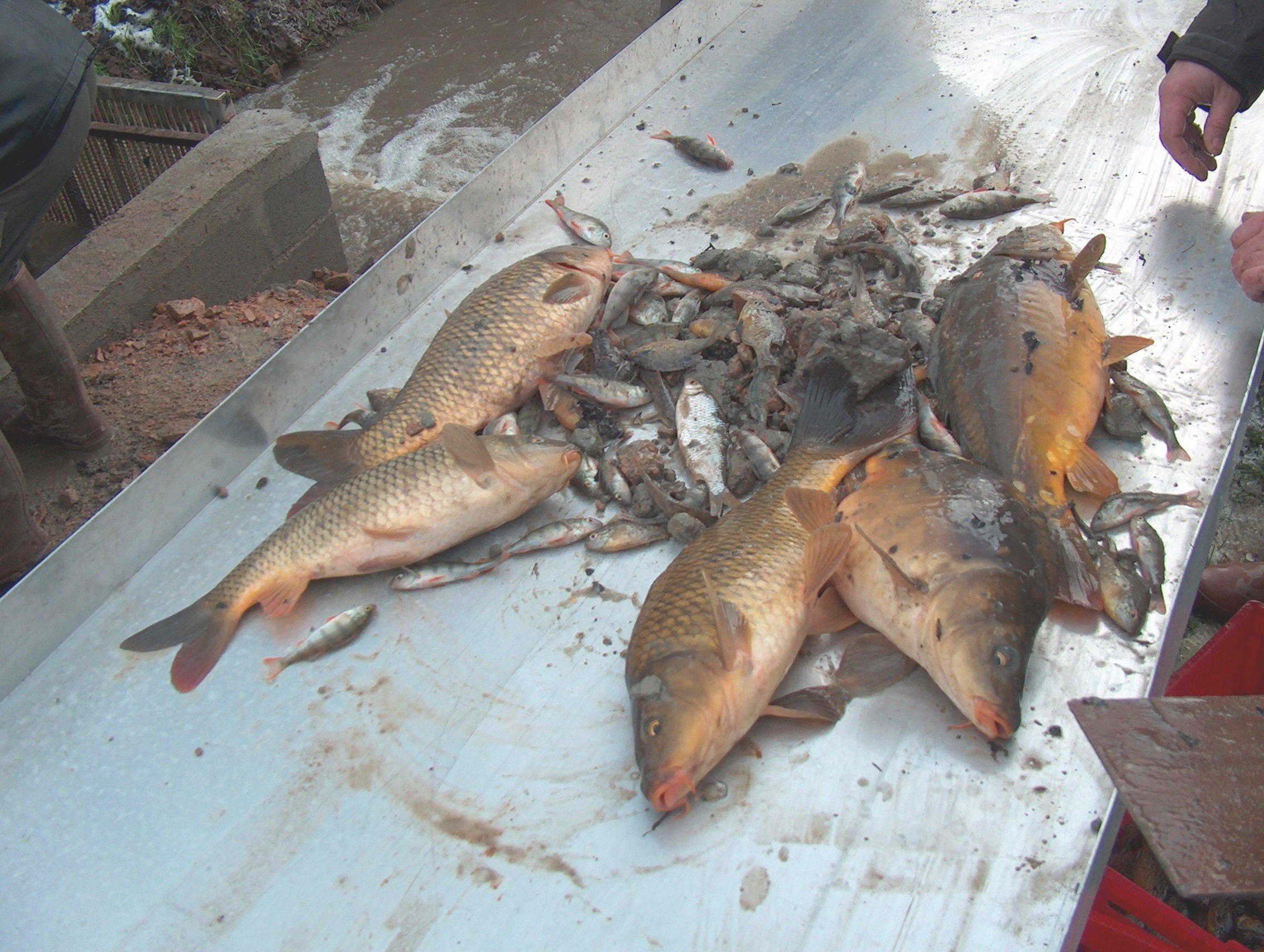 Copie de pêche de l'etang 14dec2008 032