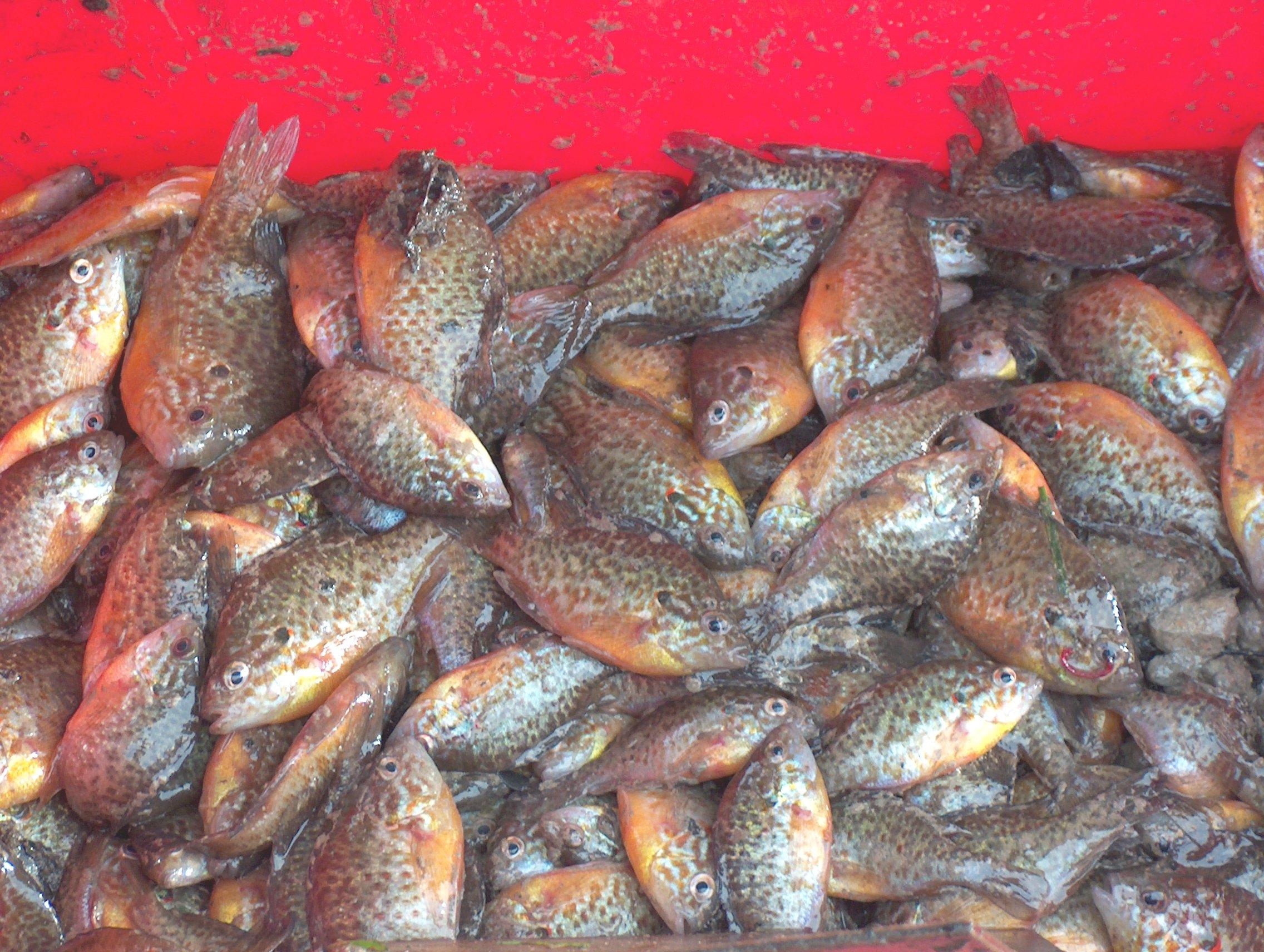 Copie de pêche de l'etang 14dec2008 036