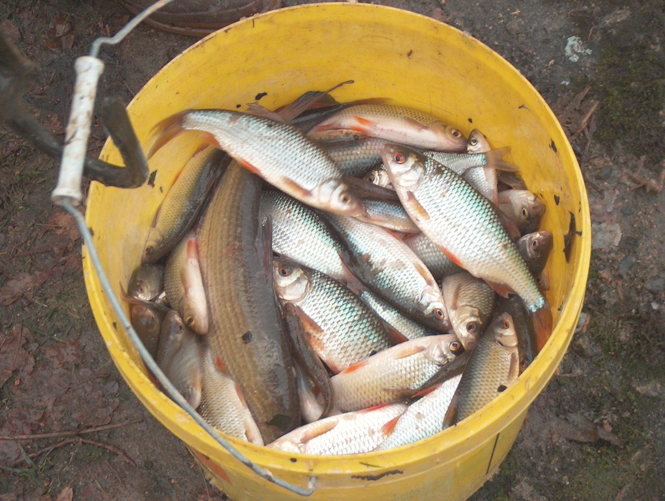 Copie de pêche de l'etang 14dec2008 062