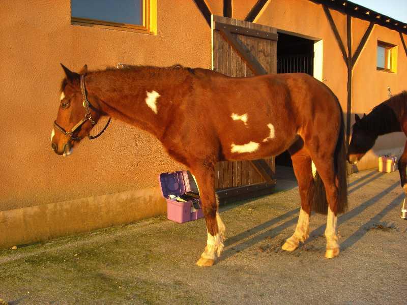 La silhouette du vieux cheval 08122709592338072919677