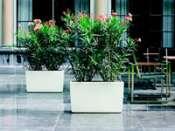des pots Design : Lechuza Mini_090104055827506172952181