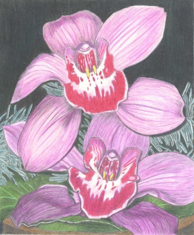 Orchidées 090110042031516232977645
