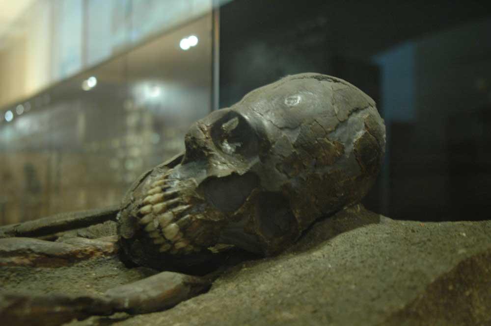 Musée de la Préhistoire - les Eyzies de tayac 090118123002111023011803