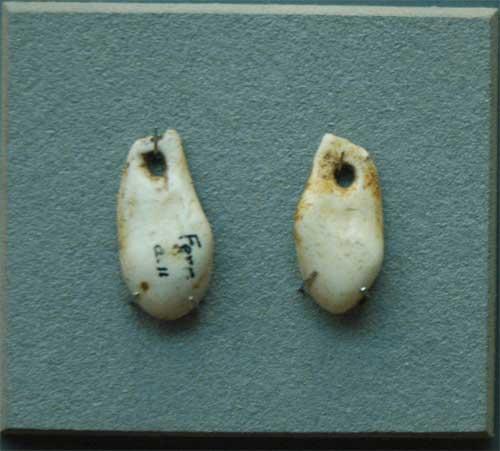 Musée de la Préhistoire - les Eyzies de tayac 090118123025111023011804