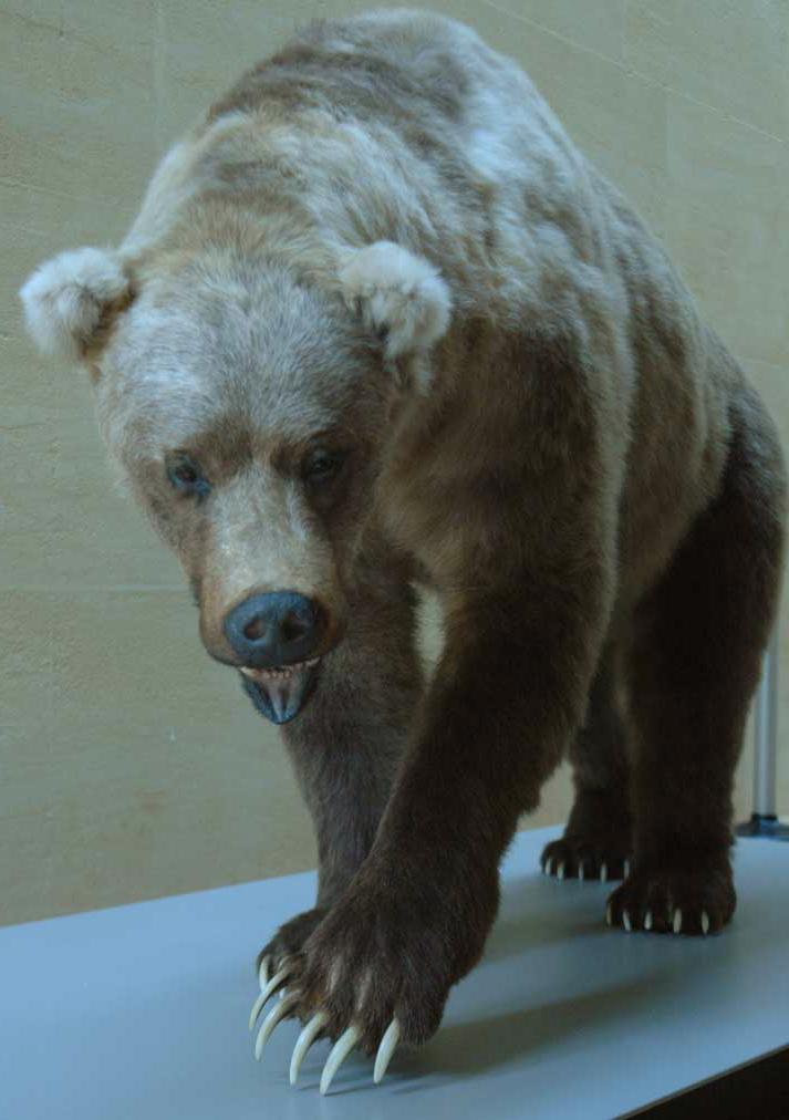 Musée de la Préhistoire - les Eyzies de tayac 090122045309111023037033