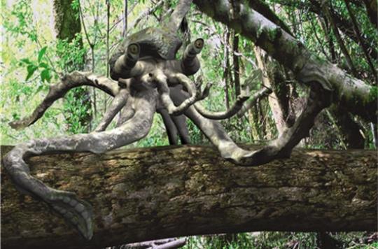 Pieuvre-singe (beurkkk) dans Animaux insolites 090313024507133813308010