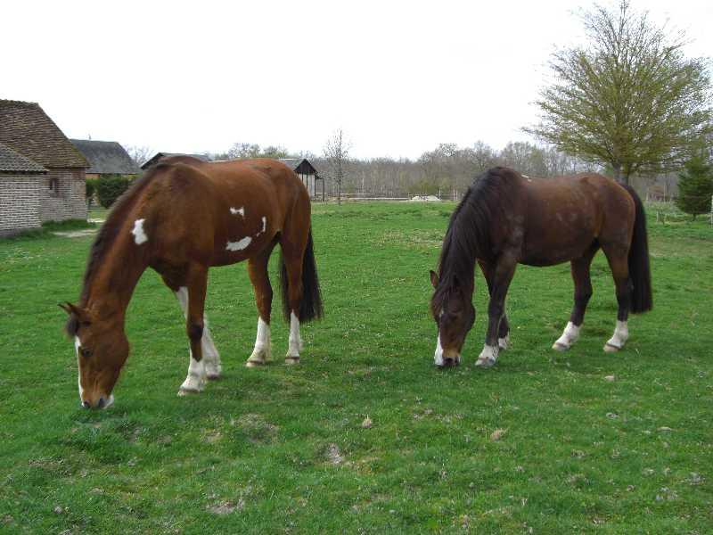 La silhouette du vieux cheval 09040510520538073433709