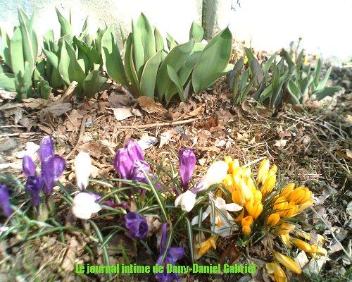 blogue sherbrooke fleurs