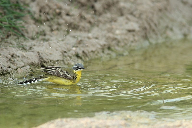 Les pieds dans l'eau + MAJ du 23/04/09 le sêchage 090421010927281863520511