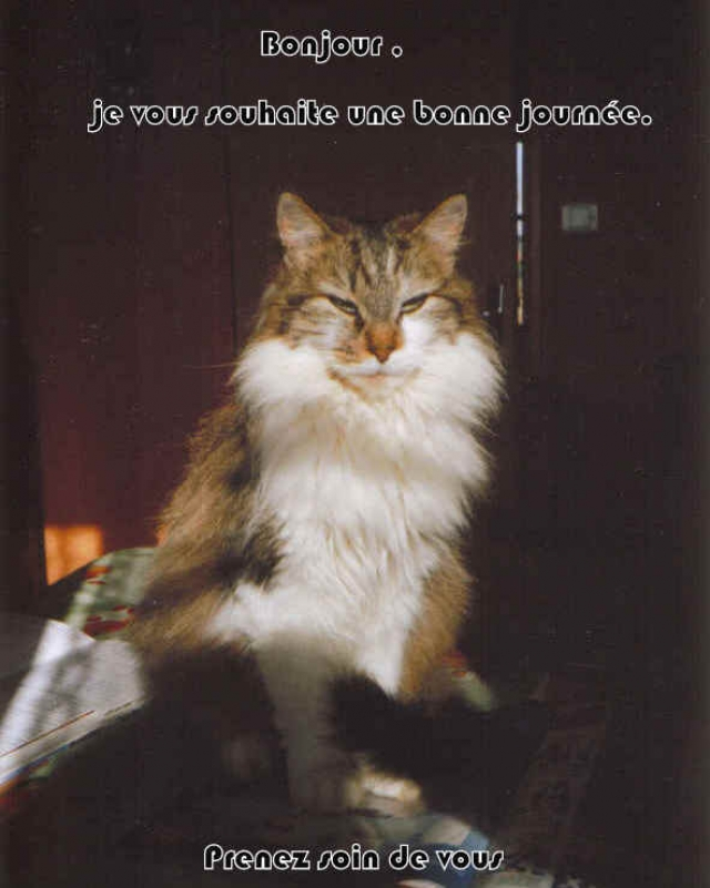 Une Histoire d'amour... dans chats(animaux) 090513010926298823650243