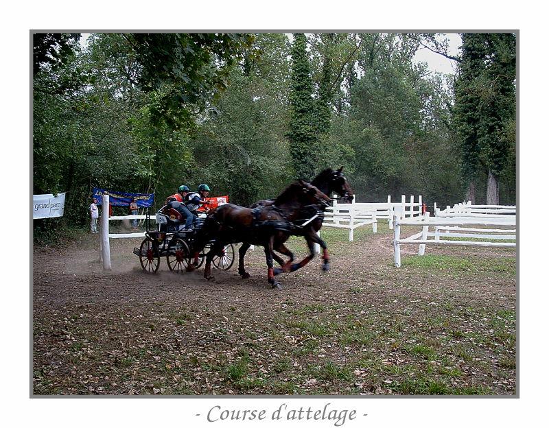 Course d'attelage 090513094648139003655700