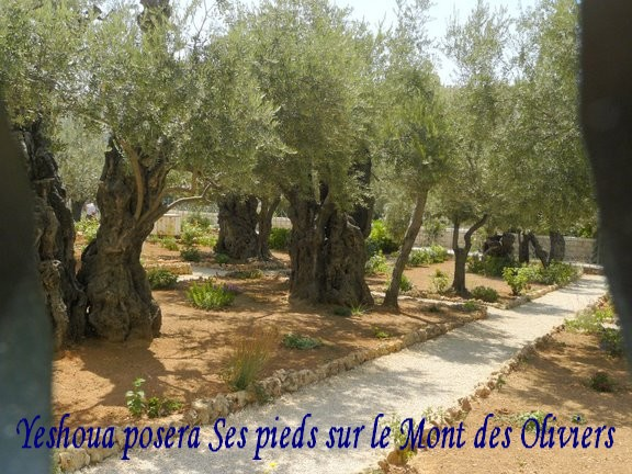 Hachem est au milieu d 39 israel barouk ata adona elohenu for Au jardin des oliviers
