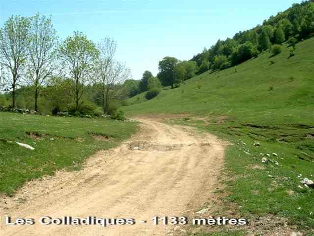 Les Colladiques - ES-GI-1133