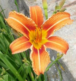 Jardin D Images Ouvrons Nous A Dieu Comme La Fleur S Ouvre Au