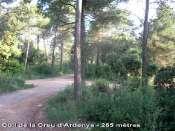 Coll de la Creu d'Ardenya - ES-B-0265