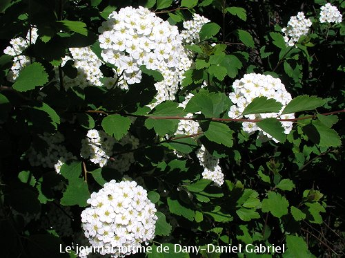 fleur blogue sherbrooke