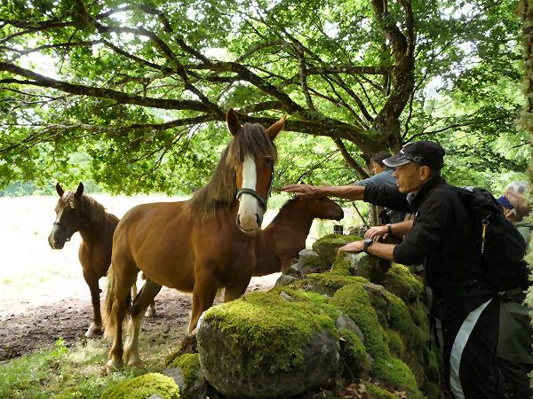 Photos du Cantal 090617092106412603889505