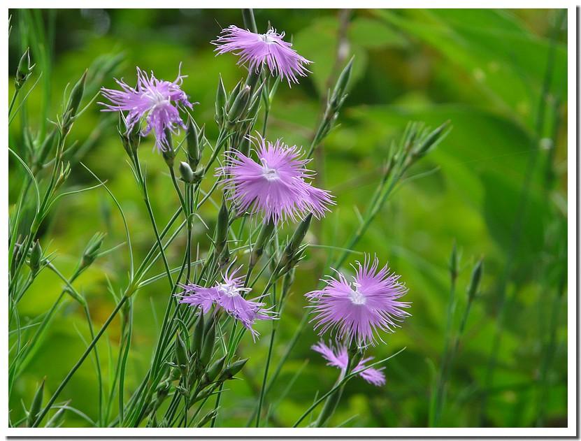 fleurs et faune sauvage 090625102737123973950943