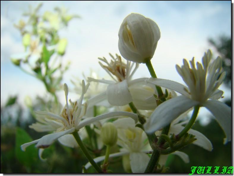 Image hébergée par Casimages.com : votre hébergeur d images simple et gr<a    href=