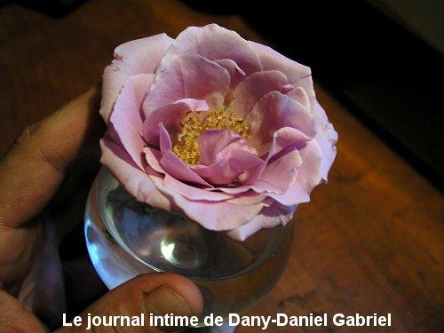 rose mauve coupe cognac